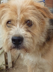 Dog for Adoption - Fugu